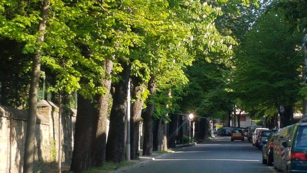 Gli alberi di via Rossetti, un immagine della seconda parte della via e dei suoi filari di alberi.