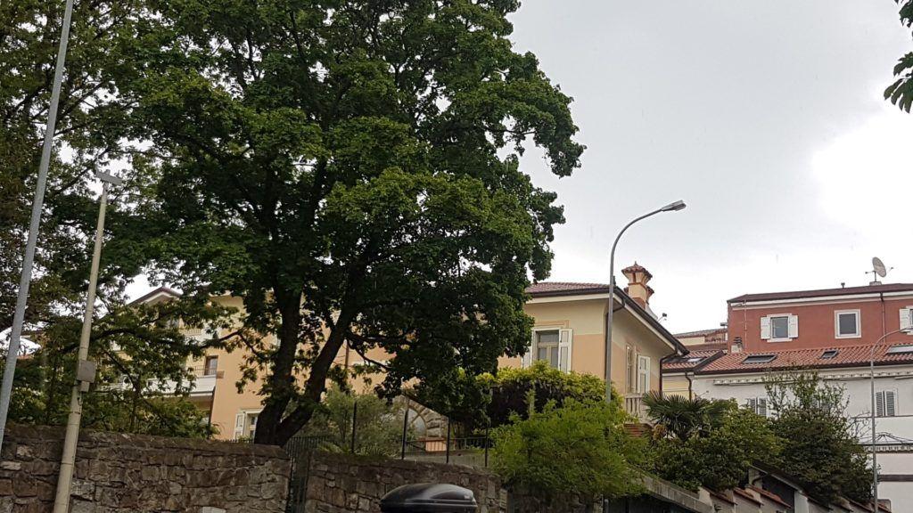 consolato sloveno 3