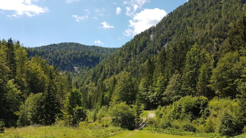 Le foreste attorno alla val Bartolo