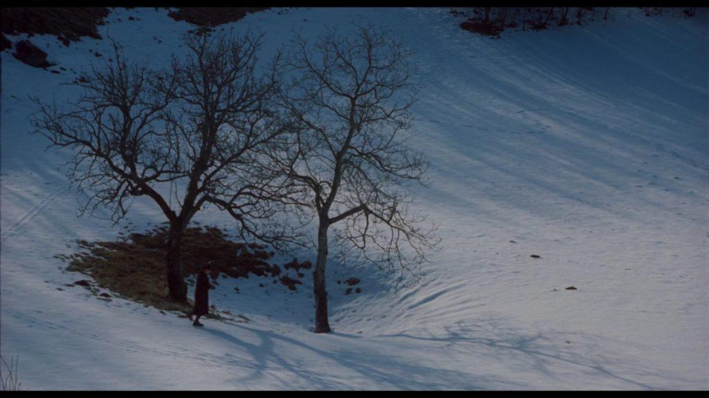 Storie, boschi castagne in un immagine