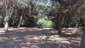 Addentriamoci nel bosco di pini a Lignano Pineta a Ligna