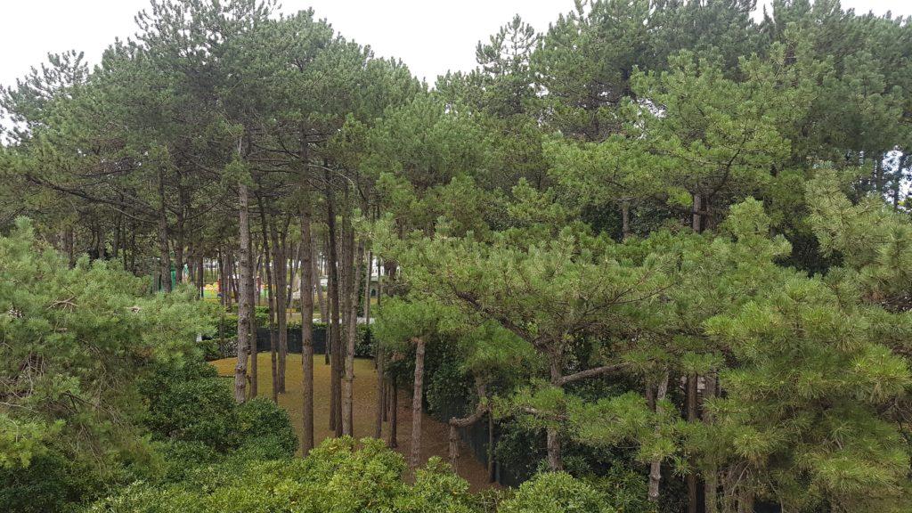 La pini e le cicale di Lignano Pineta