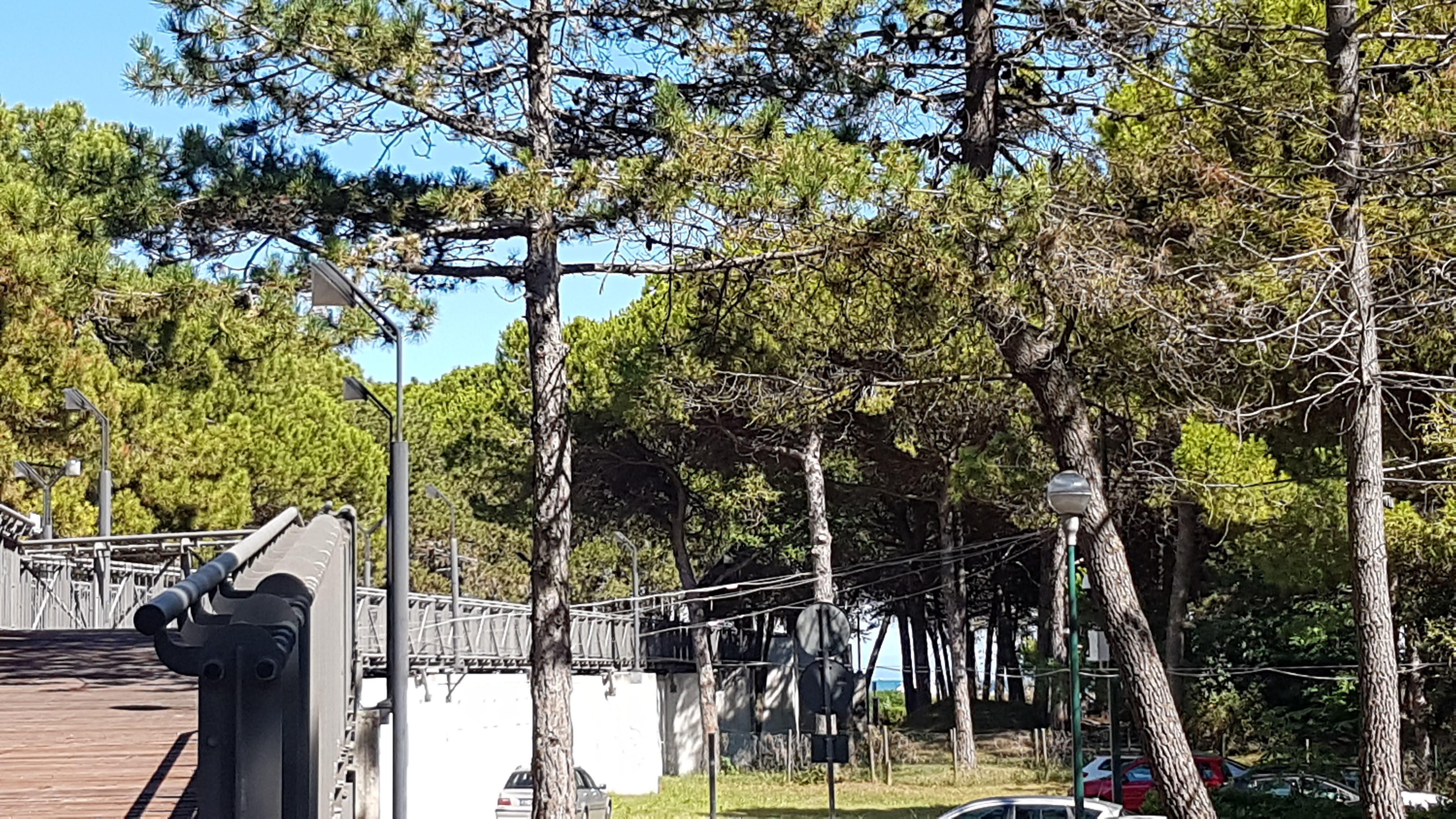 Lignano Pineta Parco Unicef la passeggiata