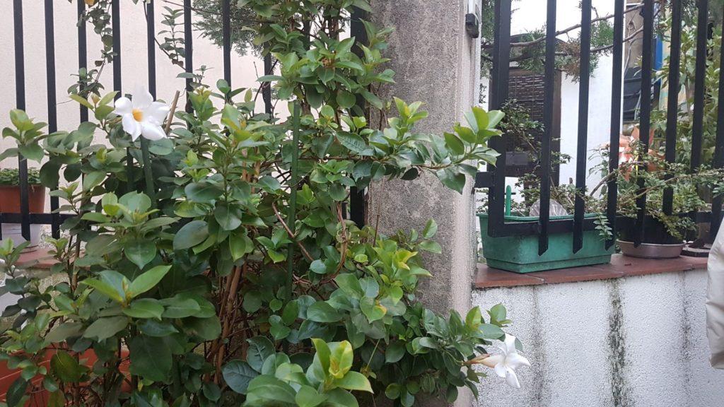 Piccola Parigi i giardini
