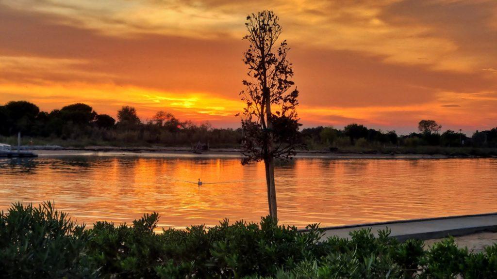 cigno al tramonto sul Tagliamento