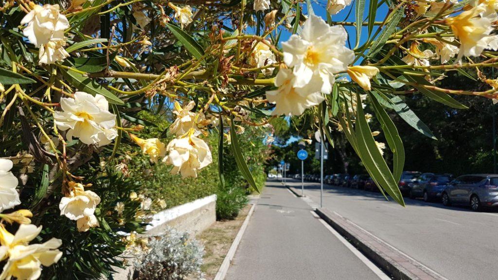 piste ciclabili di Lignano Riviera